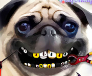 game Pug Teeth Problems